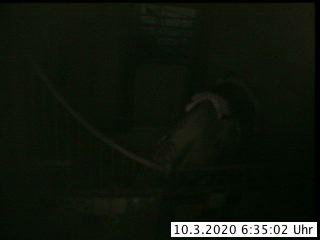 Klick für Webcam in eigenem Fenster